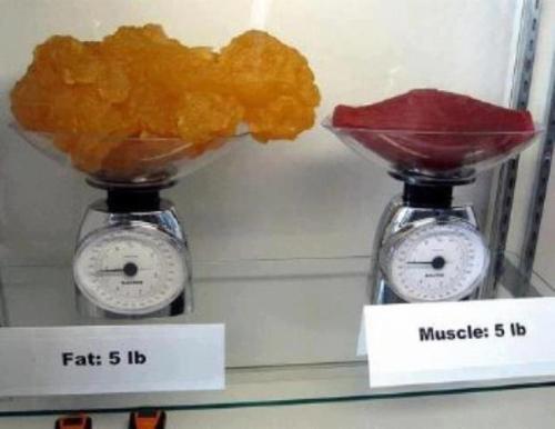 otot lemak