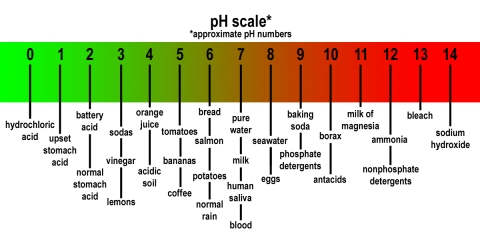 ph scale of the human body